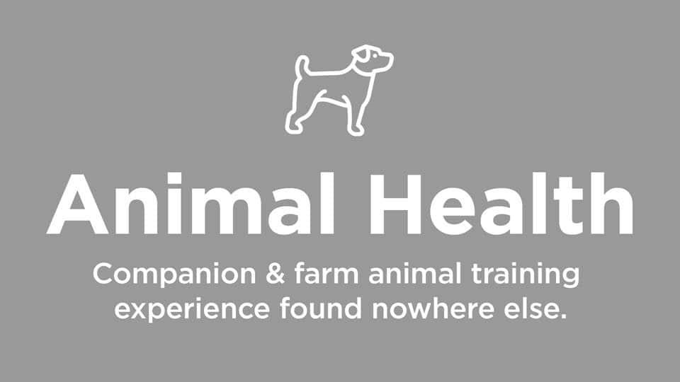 Animal / Companion Animal Training Experience